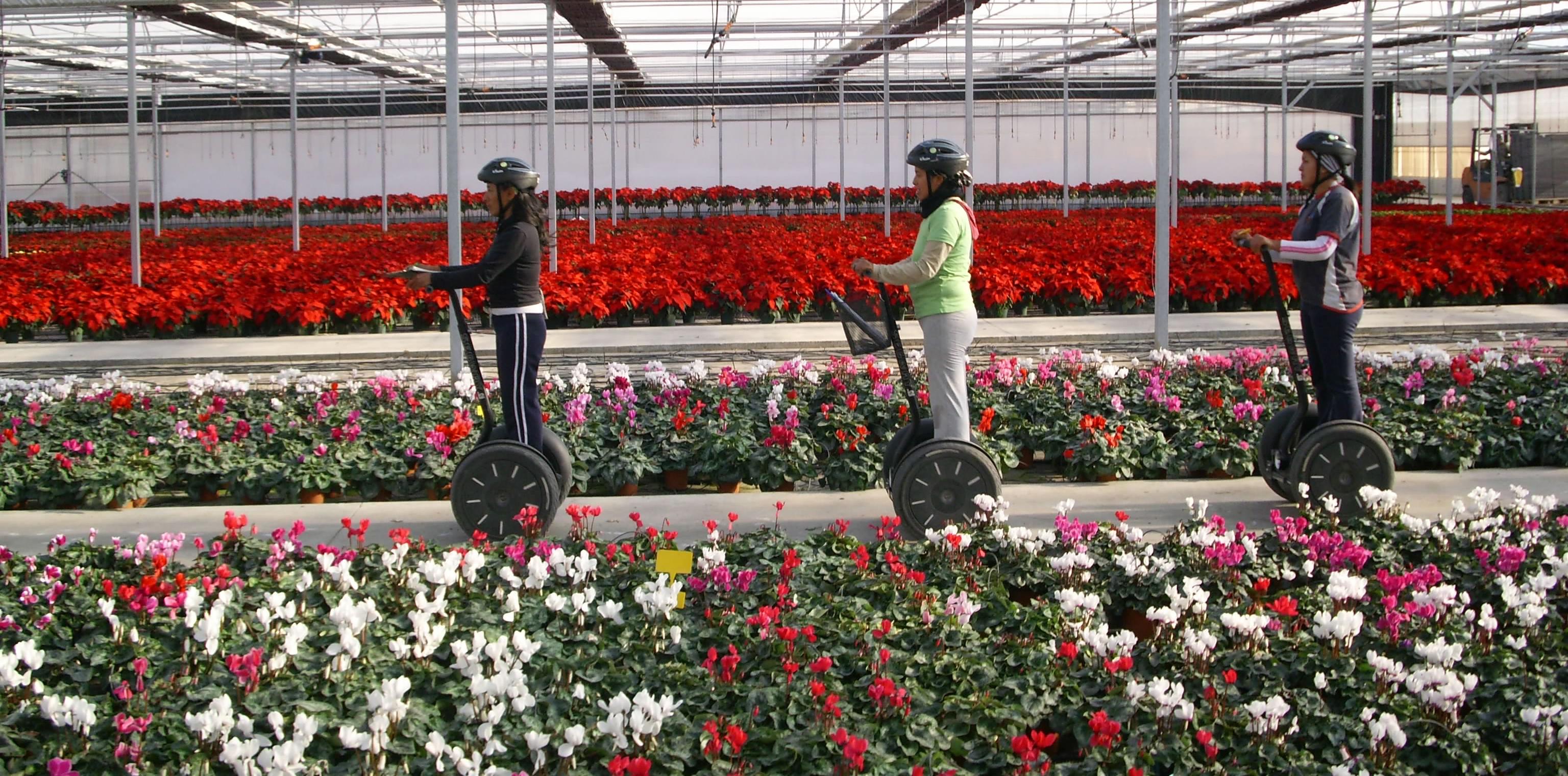 Garden centre staff tremendously more productive on 5 - Viveros bermejo ...