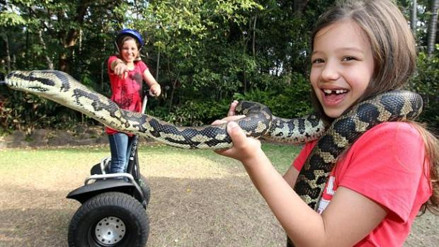 Segway Safari at Currumbin Sanctuary. Queensland (photo from linked CourierMail article).