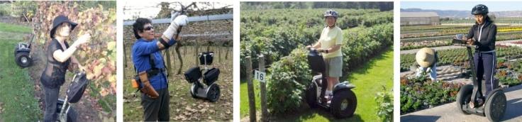 Waikato vineyard; Bay of Plenty Kiwifruit orchard; Canadian berry farm; Spanish plant nursery and garden centre.